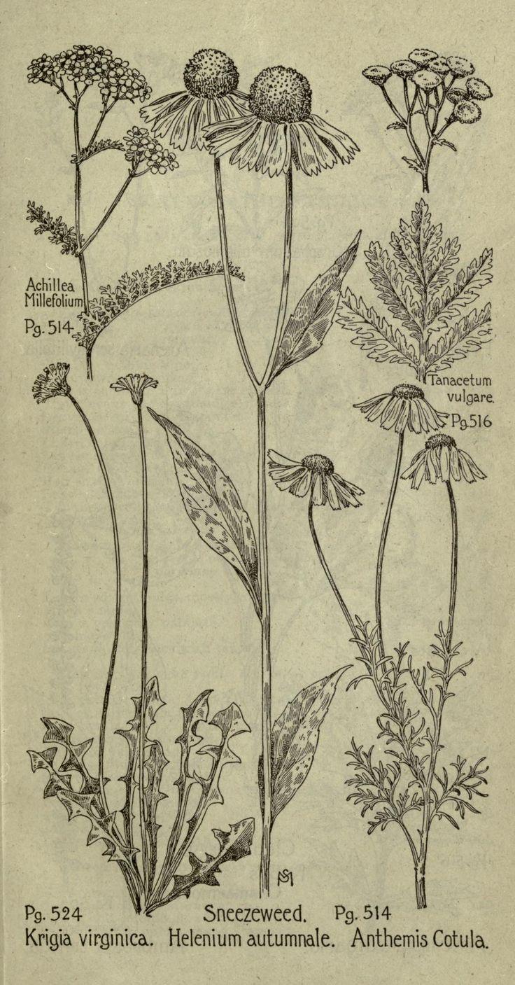 Yarrow Plant Tattoo