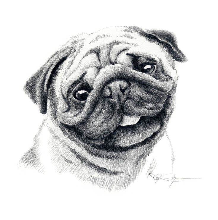 pug pencil drawing - Google Search
