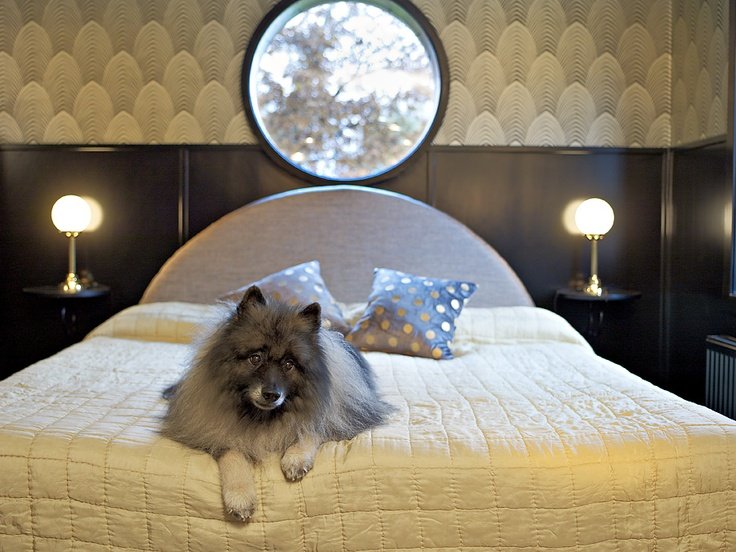 Not all fluffy canines make it into Greta Garbo's own room. What's his secret? At c/o Krägga Mansion.
