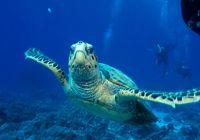 Scuba diving #Finnmatkat