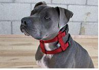 Maximum control collar by Ceasar Millan.. Dog Whisperer Cesar Millan | Dog Training DVDs, Books, Dog Supplies. Articles & Video Tutorials