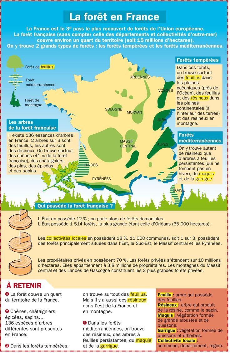 La forêt en France. L'Alsace ce petit coin à droite et en haut, si verte et touffue. de merveilleuses randonnées à faire sur le piémont des Vosges, dans les pentes ombragées...
