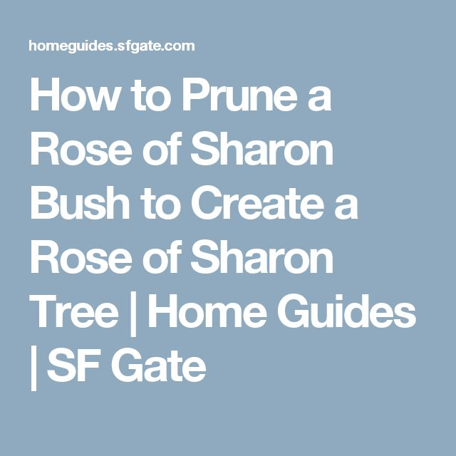 How to Prune a Rose of Sharon Bush to Create a Rose of Sharon Tree | Home Guides | SF Gate