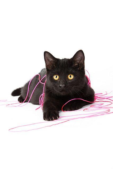 Black Kitten Cute