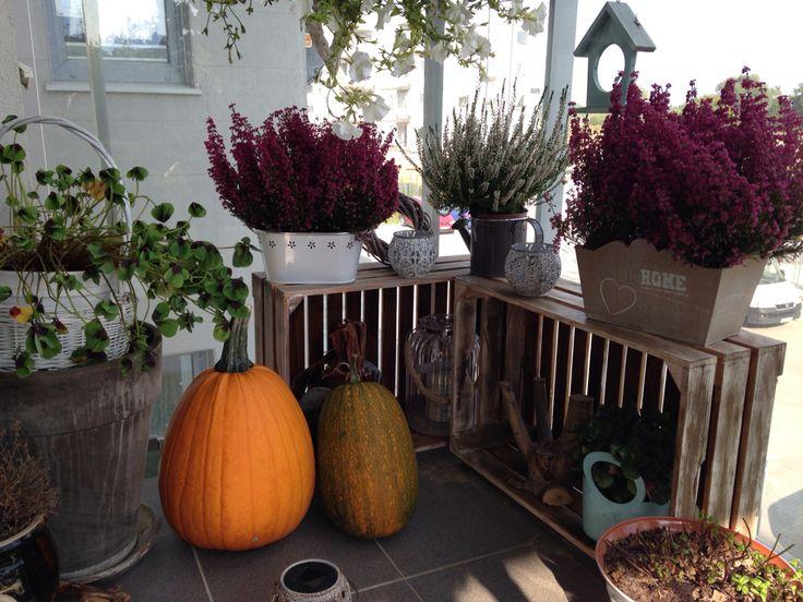 Autumn in my balcony.