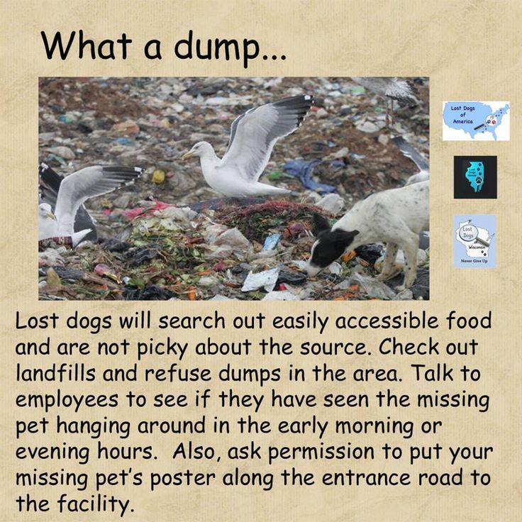 136 best Lost Dog Hints \ Tips images on Pinterest Lost pets - lost pet poster