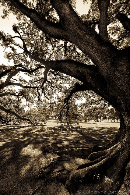 Under the old oak tree by CatheryneL, via Flickr