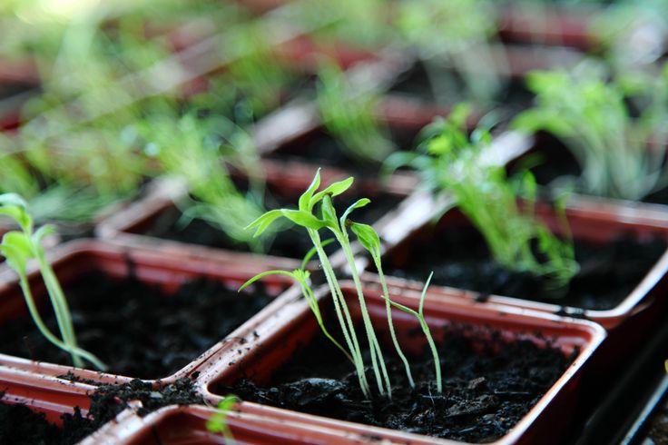 5 Rookie Gardener Mistakes To Avoid