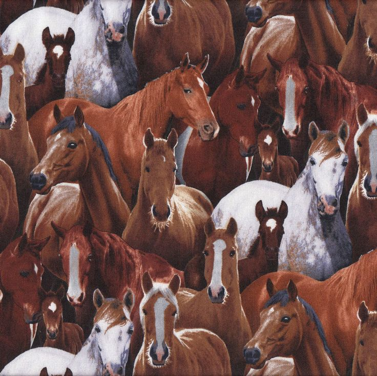 Brown Grey Horses Farm Animal Country Pony Foal Quilt Fabric - Find a Fabric - Available to purchase in Fat Quarters, Half Metre, 3/4 Metre, 1 Metre and so on.
