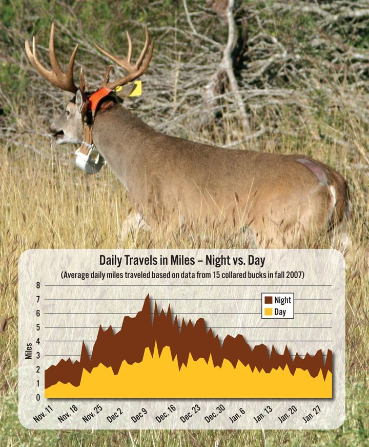 Day and Night Travel Distances deerhuntingtips