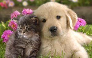 Eksempel tapet hund, kat, blomst, græs