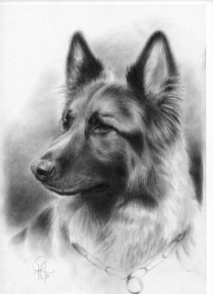 Zak (Original Portrait Commission) by Philip James Allison