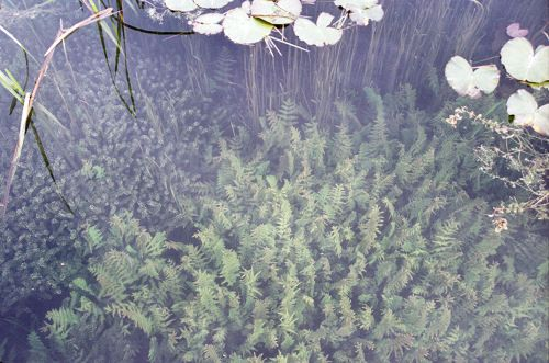 how to stop algae growth in water gardens