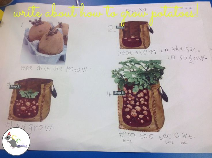 How do you grow potatoes?! #eyfs #earlyyears #aceearlyyears #supertato…