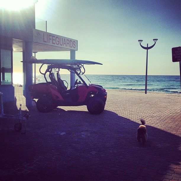 Maroubra Beach Surf Life Saving Club and buggy.