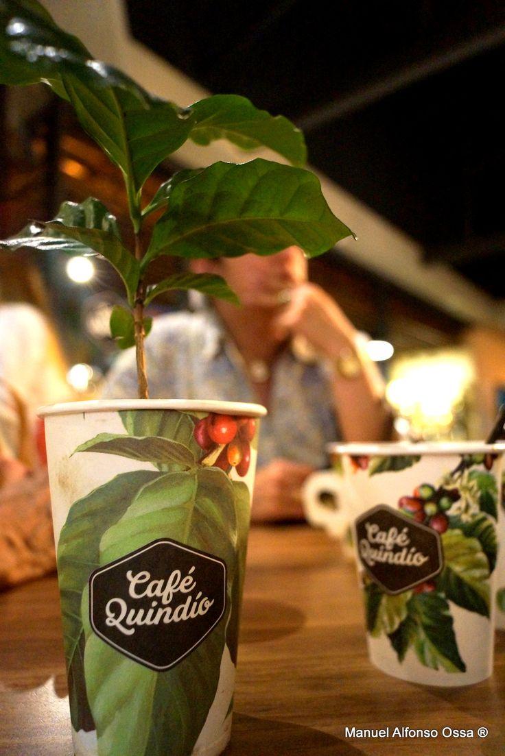 El mejor café del mundo y su mata. Tienda Café del Quindío