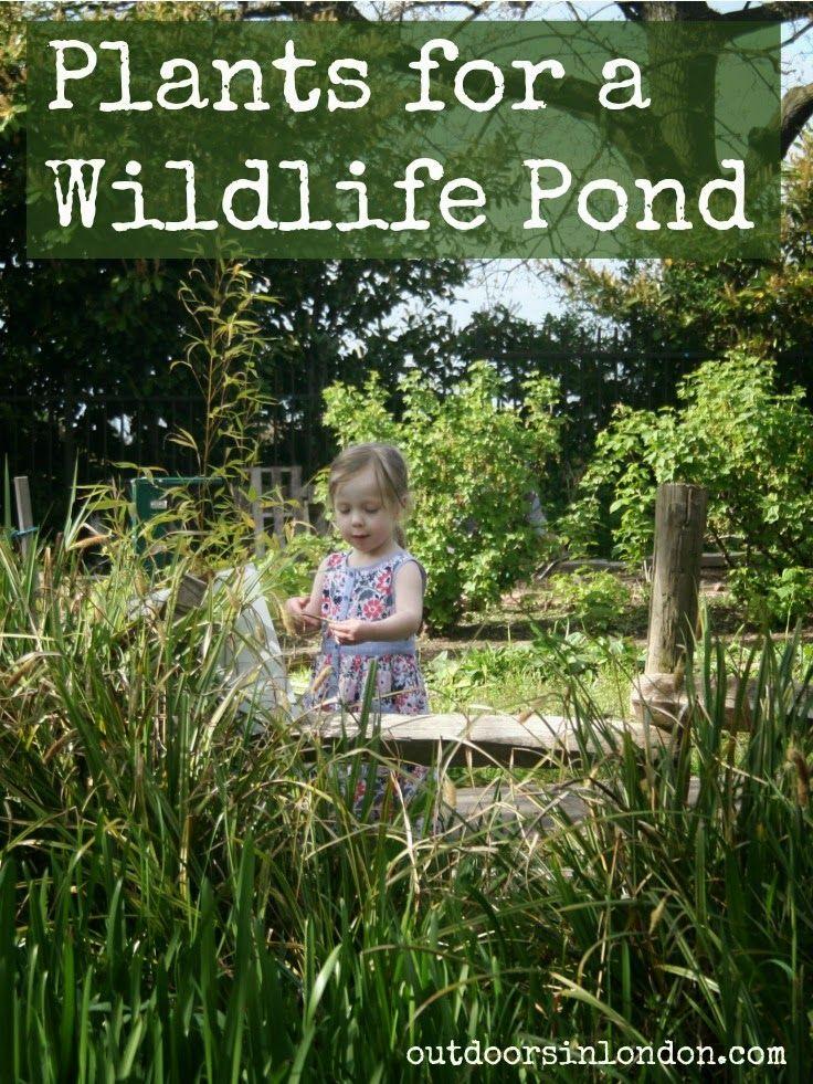 Outdoors in london building a pond plants wildlife garden ideas pinterest ponds - Build pond wildlife haven ...