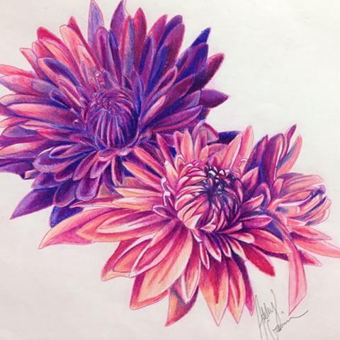 Tattoo design Chrysanthemum #tattoo #design #chrysanthemum #flower #color #drawing