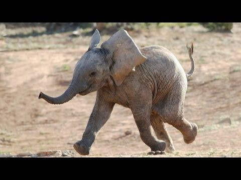 YouTube. It really is the wonders of nature, the little elephants are very intelligent, too cute and too much fun I adore them.