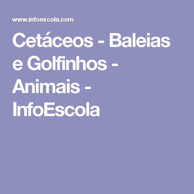 Cetáceos - Baleias e Golfinhos - Animais - InfoEscola