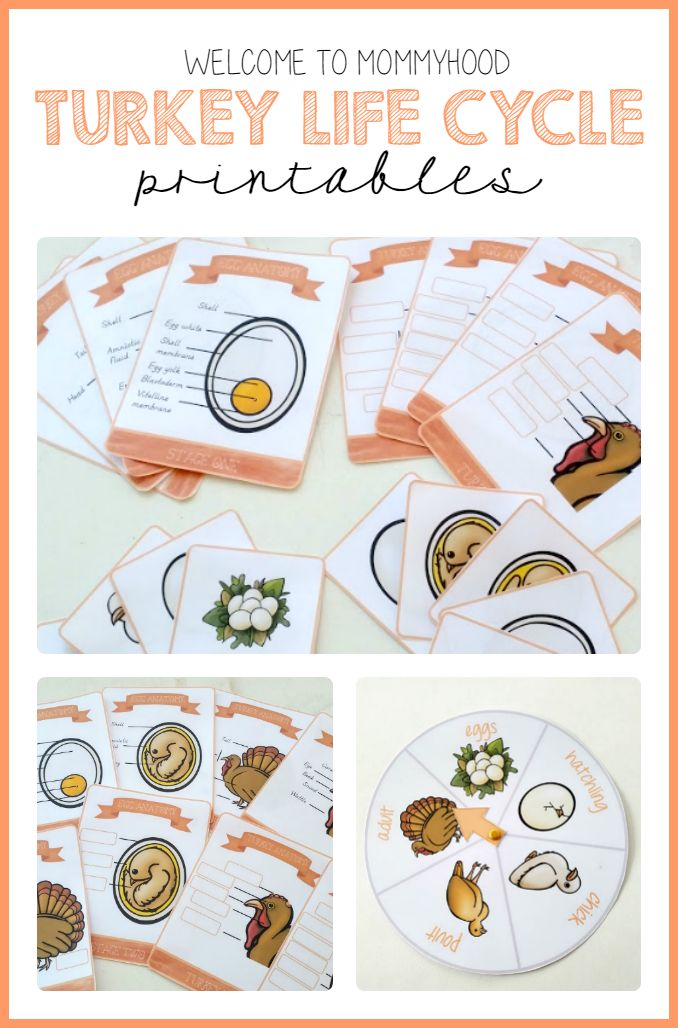 Welcome to Mommyhood: Turkey Life Cycle Printables and Activities