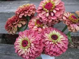 The Queen Lime Red Zinnia. Planning to have some of these for next spring in the garden.