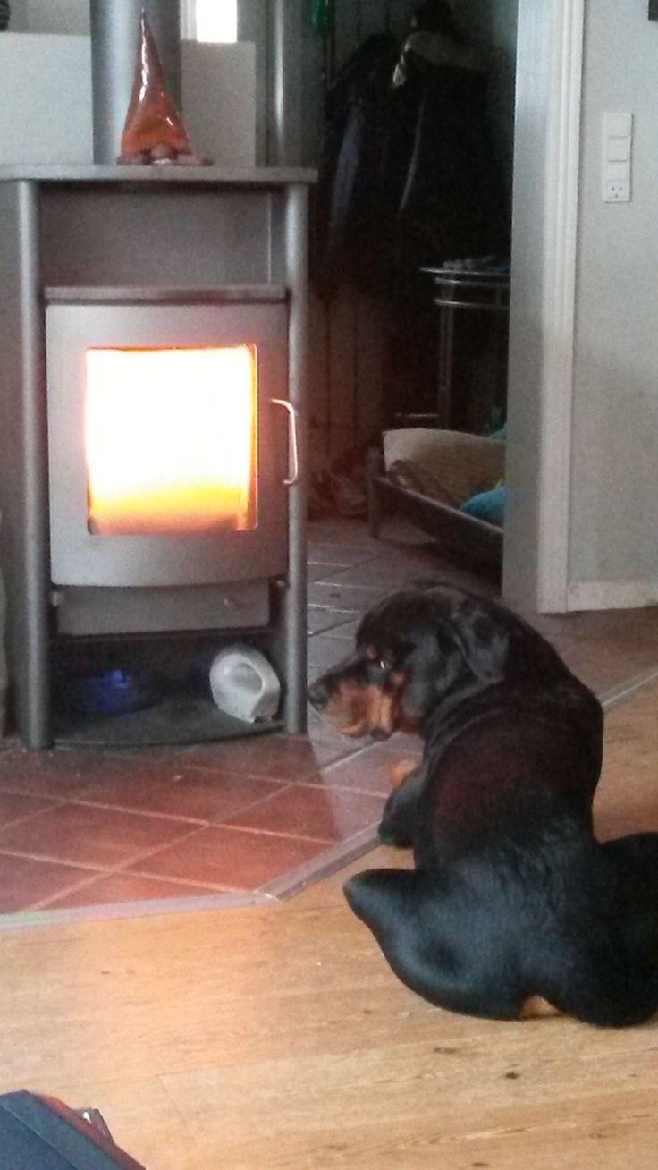 Selvom brændovnen buldrer derudaf - så skal Saki liiige suge lidt varme lige foran <3
