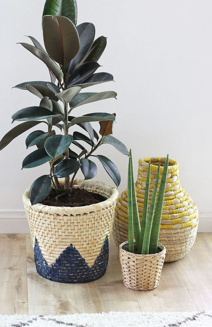 how to repot houseplants - tips for repotting houseplants | www.homeology.co.za