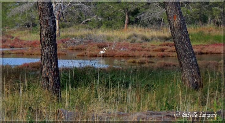 Les étangs de Lalonde Les maures...