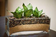 Комнатные растения в стеклянной посуде