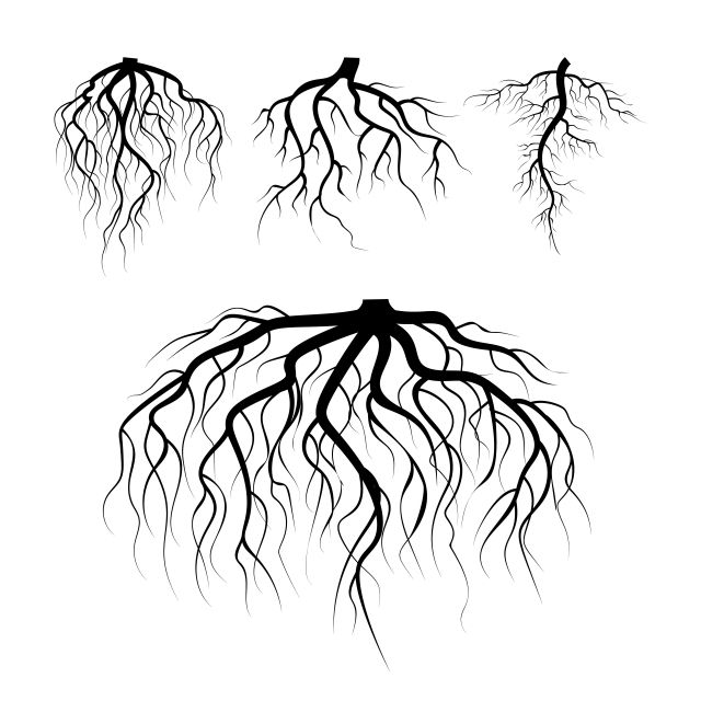 Tree Underground Roots Vector Plant Underground Roots Set Tree Root Black Illustration Of Plant Silhouette Root Vector Plant Black Png And Vector With Transp Tree With Roots Drawing Tree Roots Roots