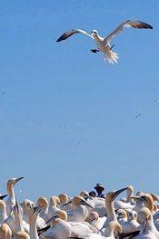 Oiseaux 004_11