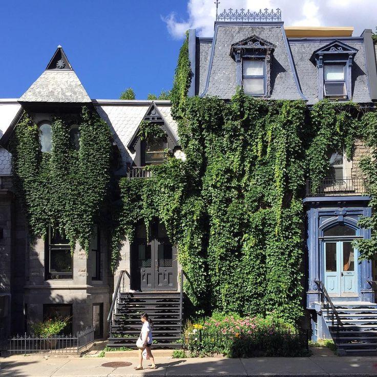 Lierre en liesse sur des maisons victoriennes (circa 1865) du quartier Milton…