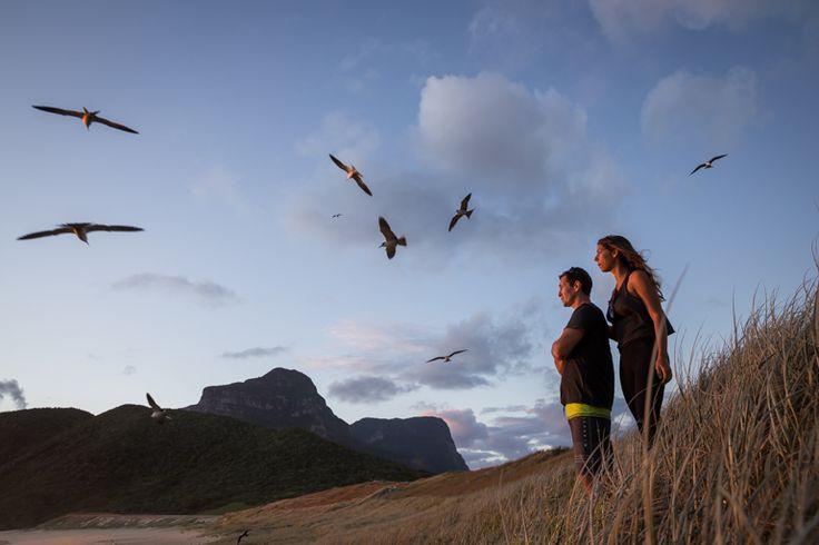 A sunrise walk with the Sooty terns | Lord Howe Island