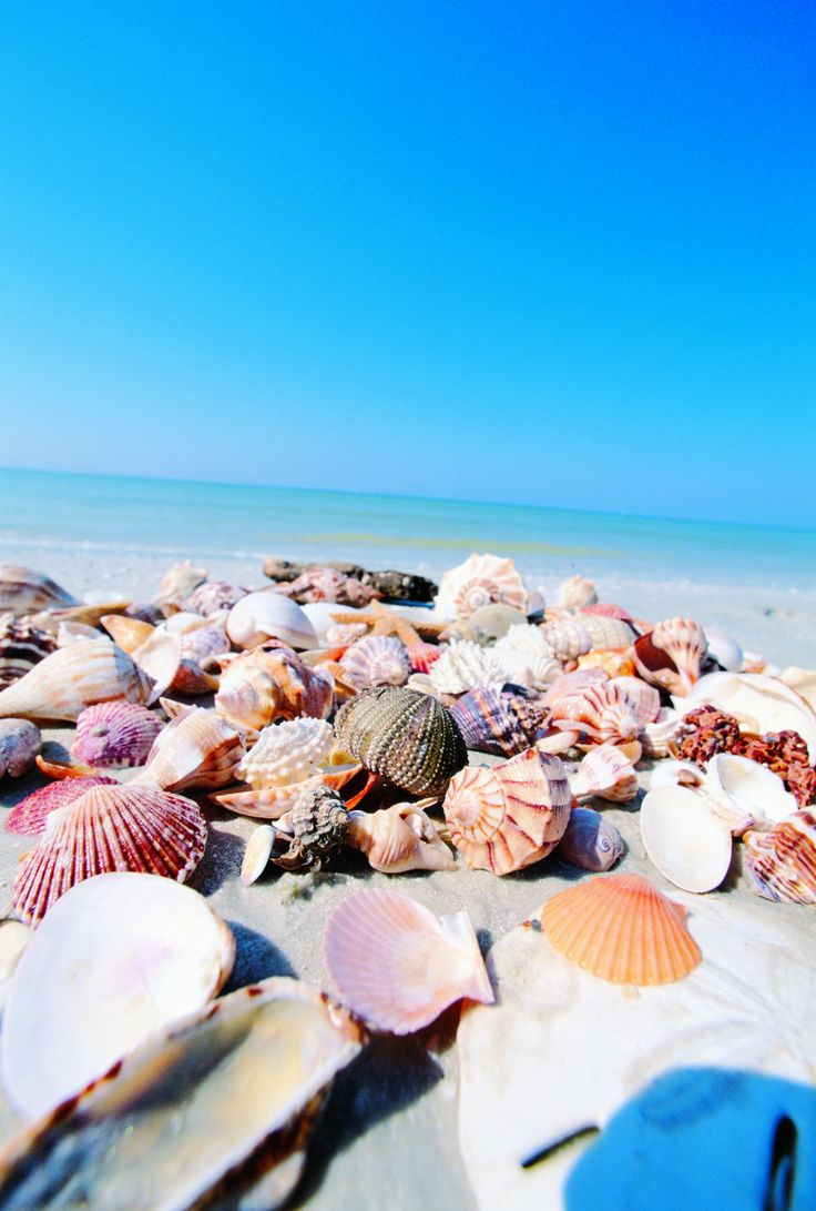 8 experiences to have on The Beaches of Fort Myers & Sanibel