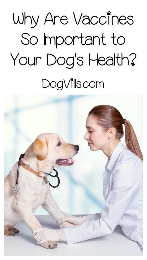 Why Are Vaccines So Important to Your Dog's Health?