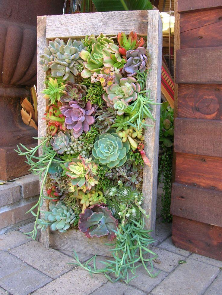 best 25 vertical succulent gardens ideas on pinterest succulent frame succulent wall and succulent wall gardens