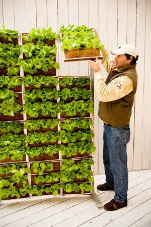 #Vertical vegetable gardens a stylish way to grow delicious edibles!