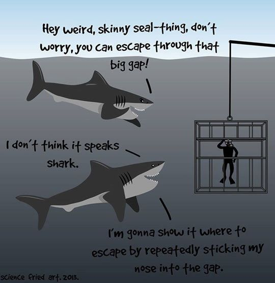 Sharks are nice guys…