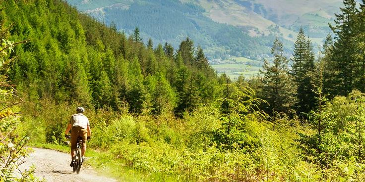 Travelzoo: 101 Things to do in The Lake District -- 19: Cycle: Quercus Trail at Whinlatter Forest - Home of the Lakes' longest purpose-built bike trails