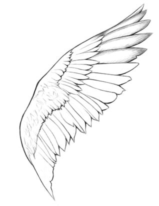 How to draw angel wings - step by step with animation!