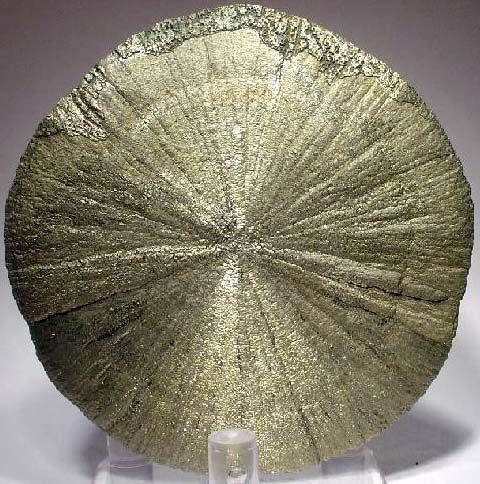 A pyrite disc or 'pyrite dollar'. They usually form between shale or clay…