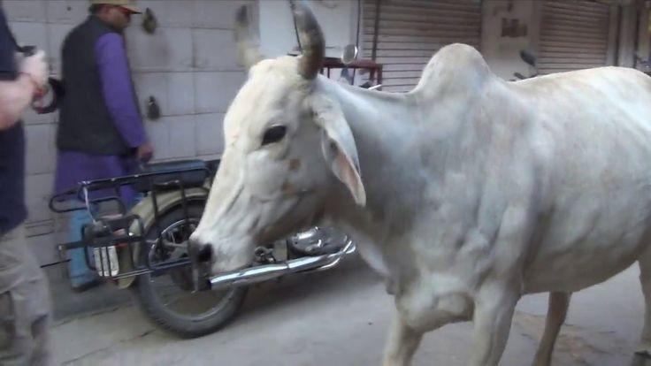 Путешествие по Индии, легендарный город Пушкар в Раджастане и святое  озеро