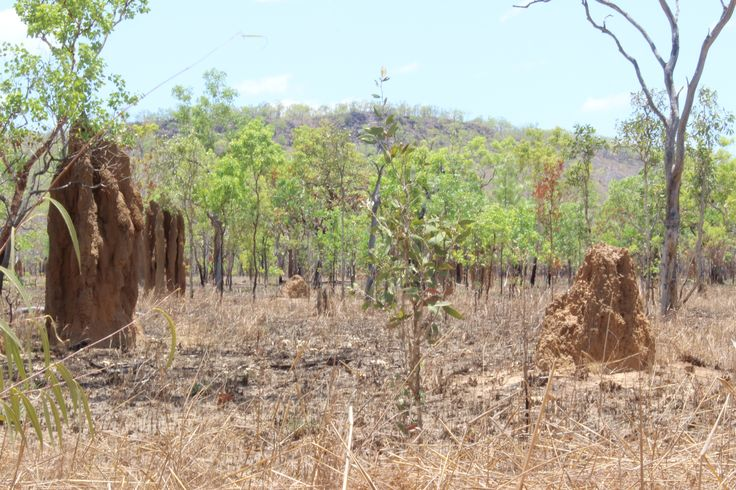 Cathedral Termite Mounds in Kakadu National Park
