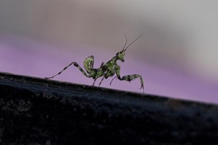 A close look at the Praying Mantis Photo by Akhilesh Raja — National Geographic Your Shot