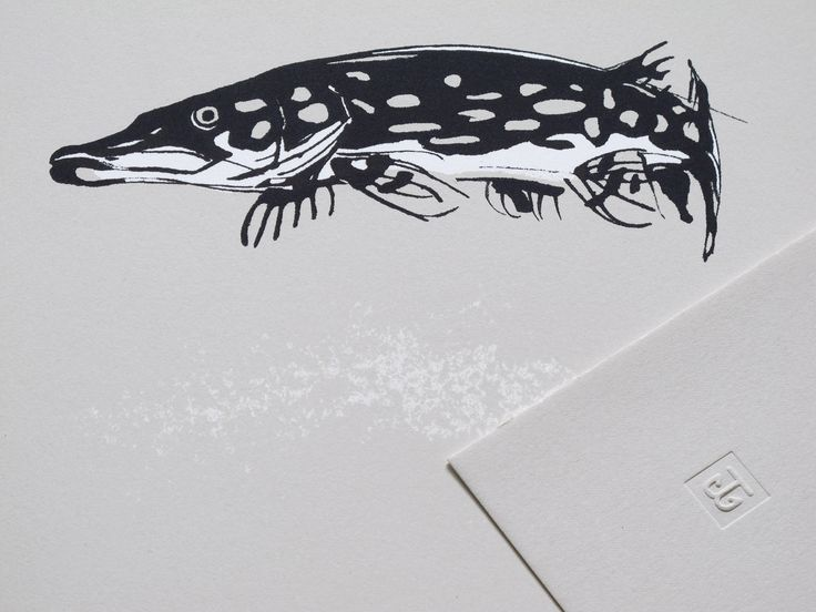 Northern Pike Fine Art Print on Paper Teemu Järvi Illustrations http://www.teemujarvi.com/en/shop/paper-prints/52-pike.html