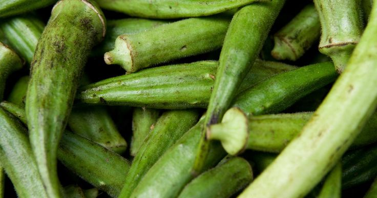 Cómo cocinar  quingombó. El quingombó es usado en muchos platos de la cocina sureña como el estofado de quingombó , este sabroso vegetal funciona por sí mismo. El quingombó es comúnmente preparado de forma rápida por los chefs hervido o frito, se sirve caliente y con frecuencia no sazonado sirve como aperitivo o guarnición.