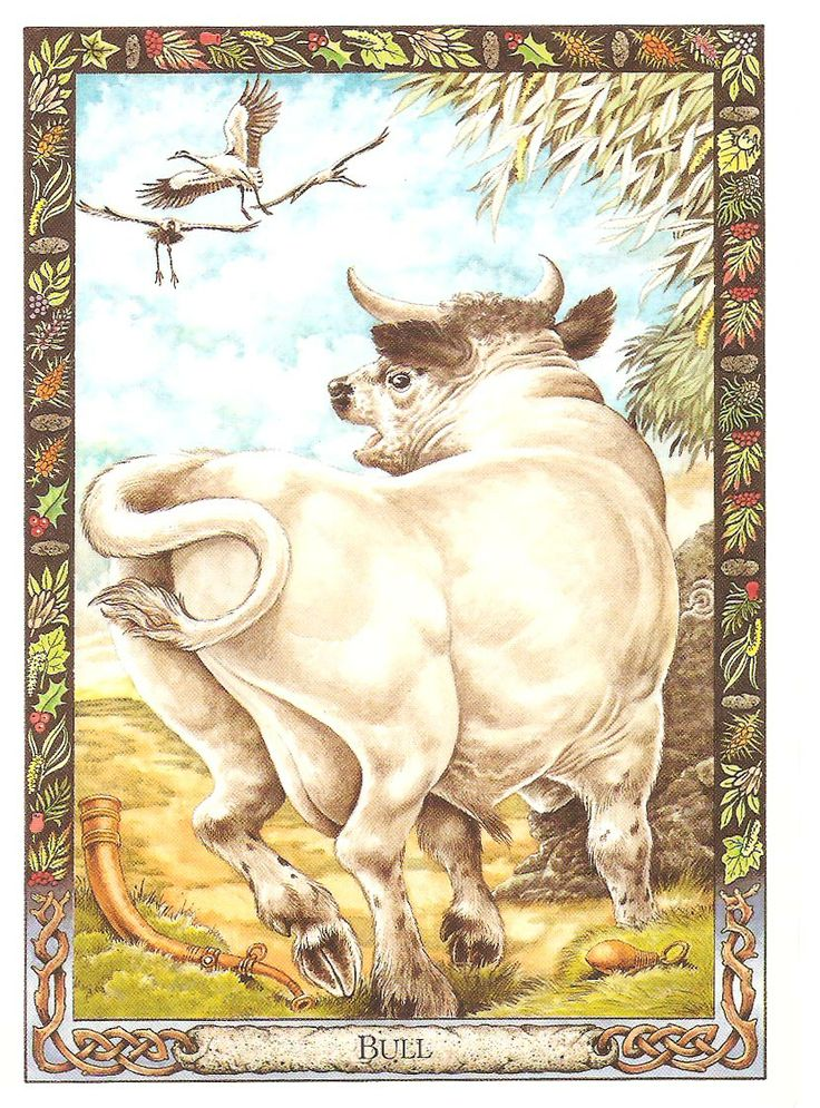 Animal Tarot Cards: 51 Best The Druid Oracle Cards Images On Pinterest