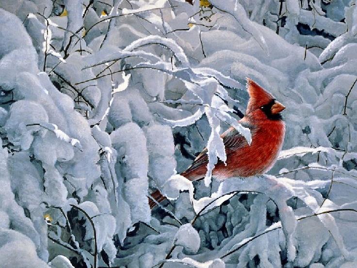 beautiful bird winter ndash - photo #25