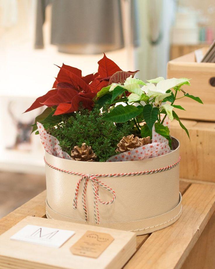 La Navidad es maravillosa!!  Y al -50% aún MÁS!!  Pásate por Maison Marina Store y disfruta!! #maisonmarina #maisonmarinagirona #maisonmarinateam #fashionbrand #fashioninspo #design #designlovers #madeinlocal #madeinspain #lovelystore #letsgotowork #fashionwork #fashionatelier #lovemyjob #girona #gironamenamora #costabravacool  #essence #esencia #pure #flowerlovers #flowerlover #boutique #lovelyboutique #lovelystore #moodboard #shooting #christmasdecorations #christmas #nadal #deco